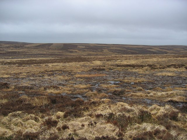Bogs on Wedder Lairs.