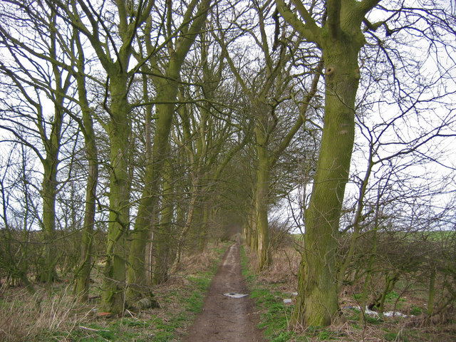 Bridleway - View north
