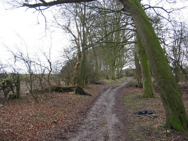 Bridleway - View South