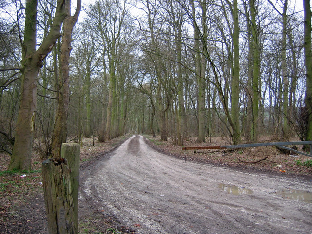 Sands Wood