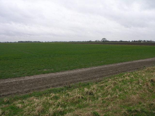 Fields to the Horizon 2