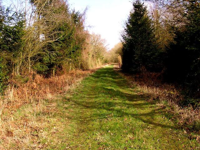 Old Railway Line, towards Longhope