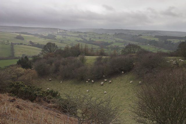Sheep in a sheltered spot