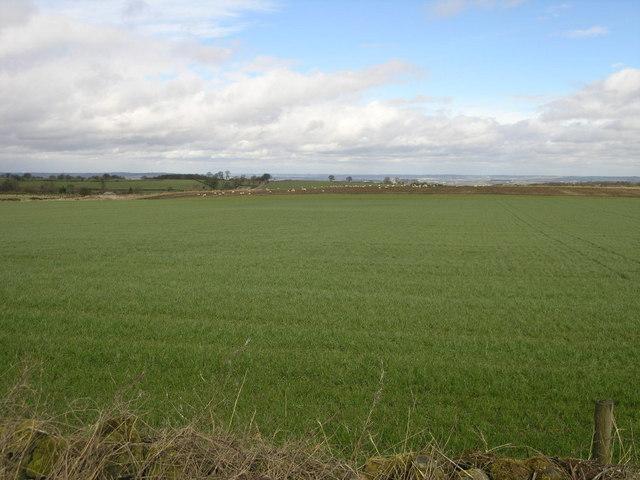 High Fields