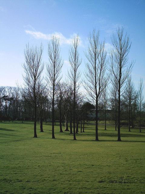 Park and Poplars