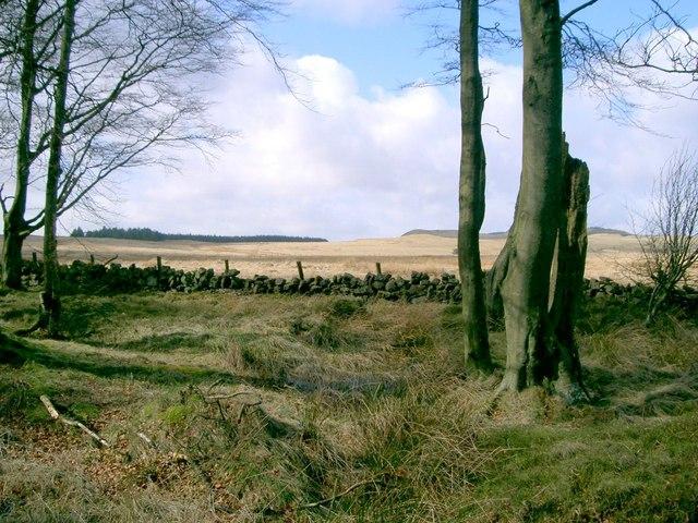 Dowhill Muir