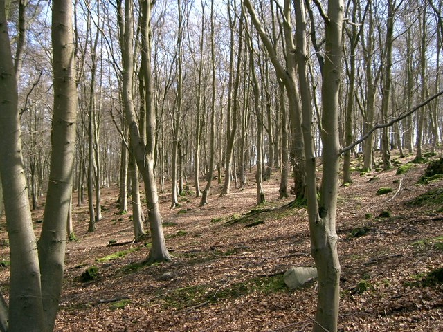 Bambricks Wood