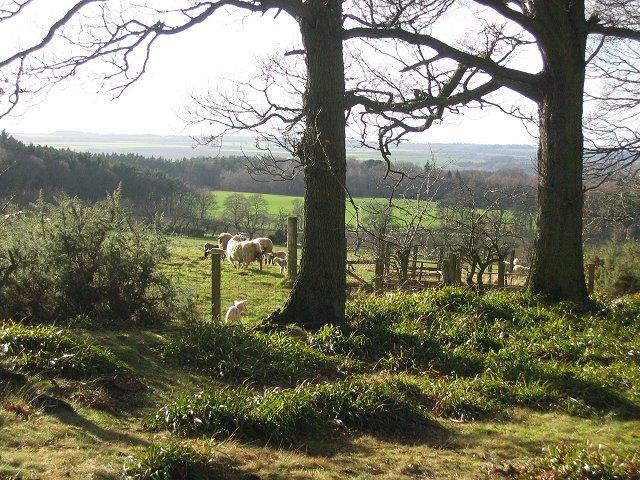 Colstoun Wood