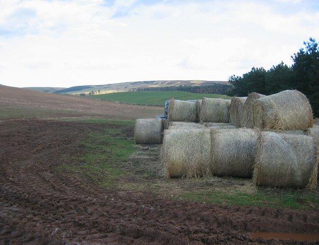 Round bales near Stoneypath.