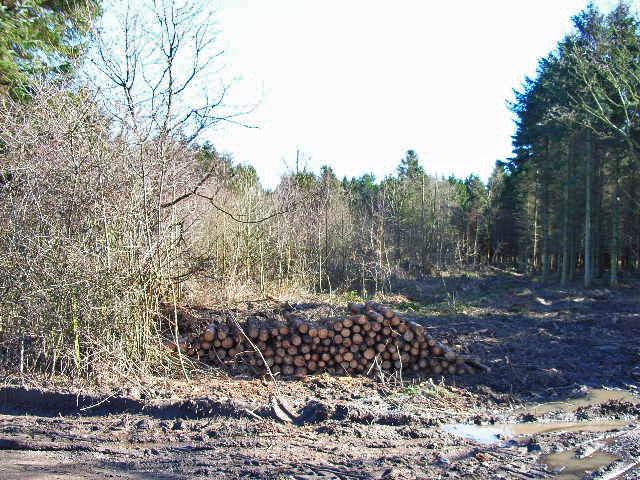 Fatten Hill Plantation