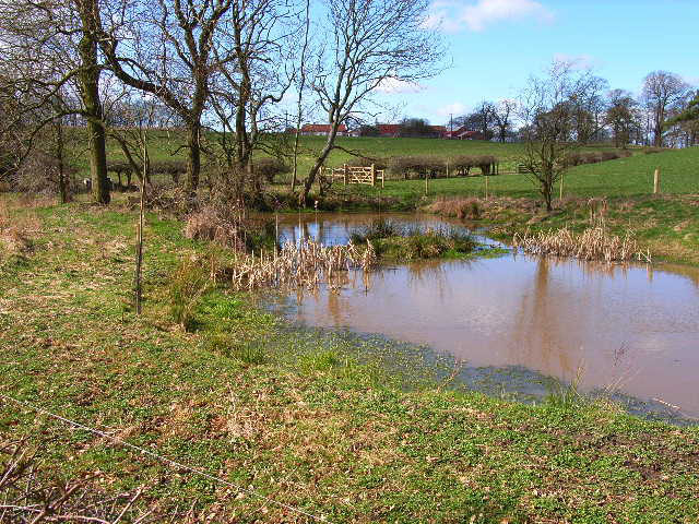 Pond near Langton Hall