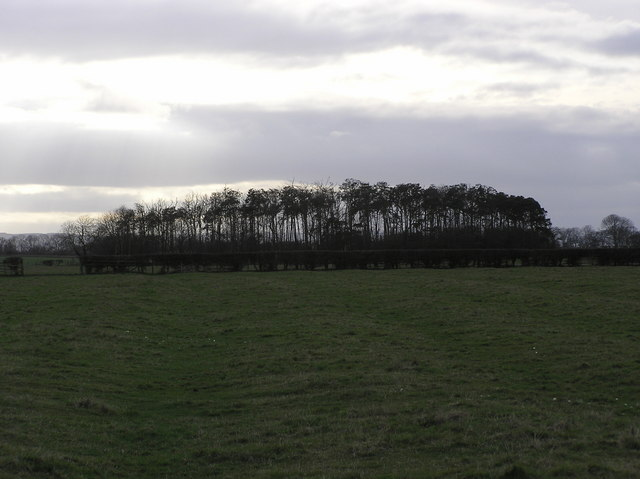 Copse Nr.Footpath from Hurworth to SnipeLane.