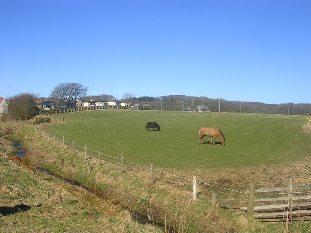 Horses grazing at Balmedie