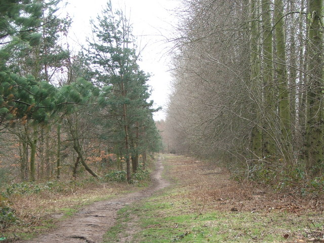 Footpath through Kings Wood.