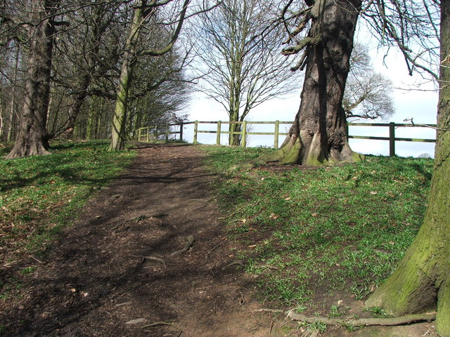 Footpath in the Garden Plantation.