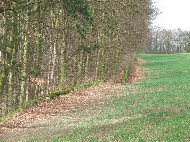 The eastern edge of Kings Wood.