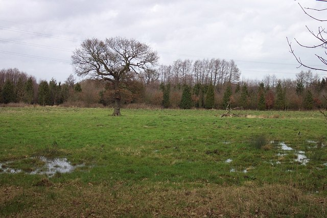 Marshy Land near Little Wyrley