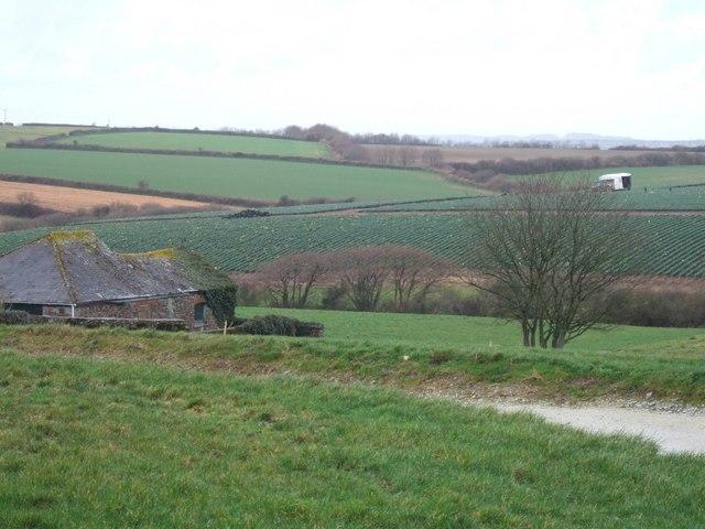 Vose Farm with daffodil fields