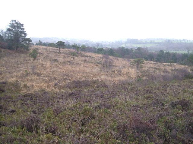 Near Hawkerland