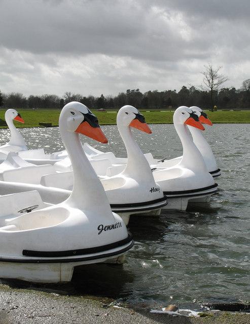 Woburn's Swans