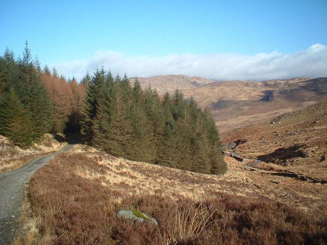 Glenhead Burn and Forest track