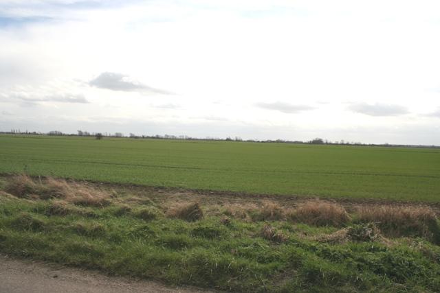 Fen Farmland, Morton Fen