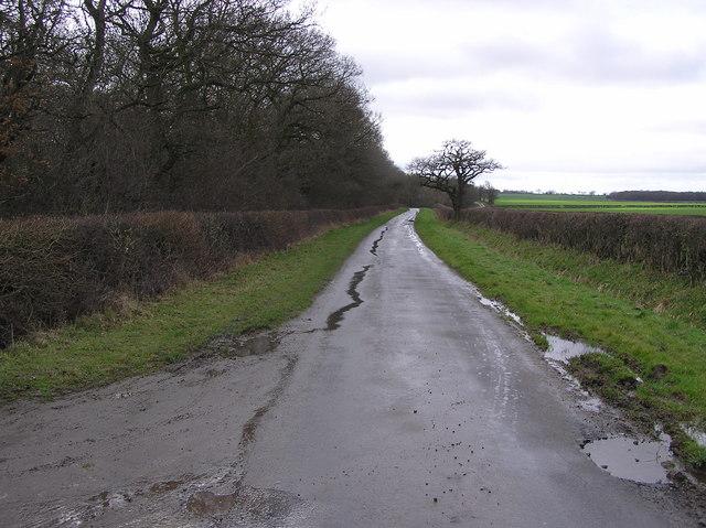 Eryholme Lane , Docking Slack Plantation
