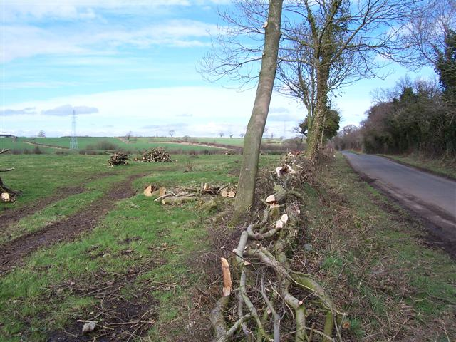 Felled Hedge.
