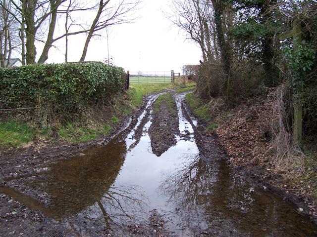 Wet Footpath track