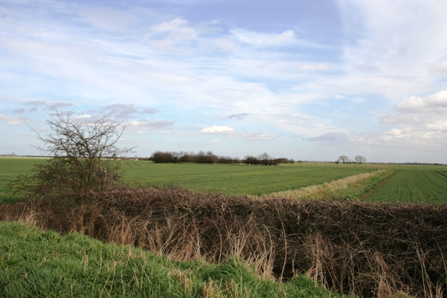 Old hedge boundary of fen field system