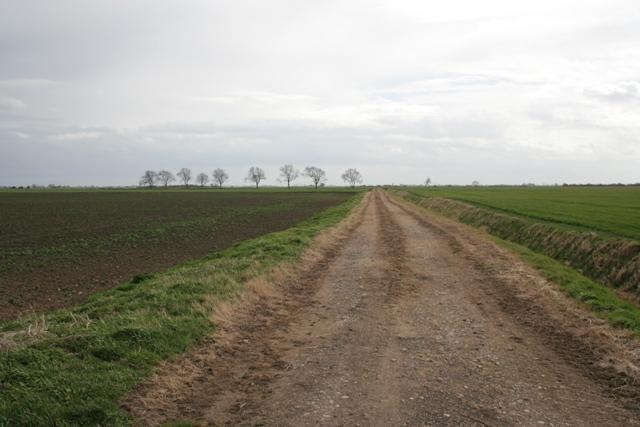 Farm Track on Haconby Fen