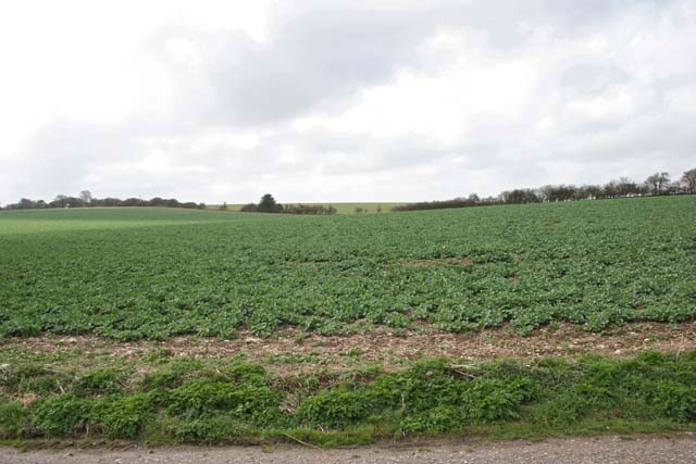 Farmland on the eastern edge of Middle Wallop Airfield
