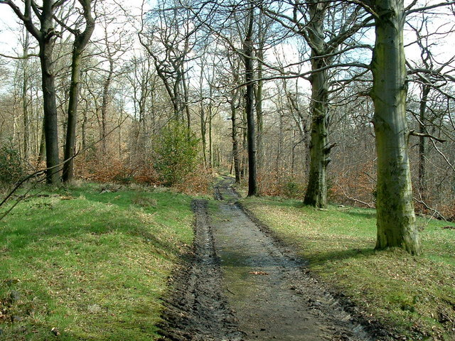 Carr Wood