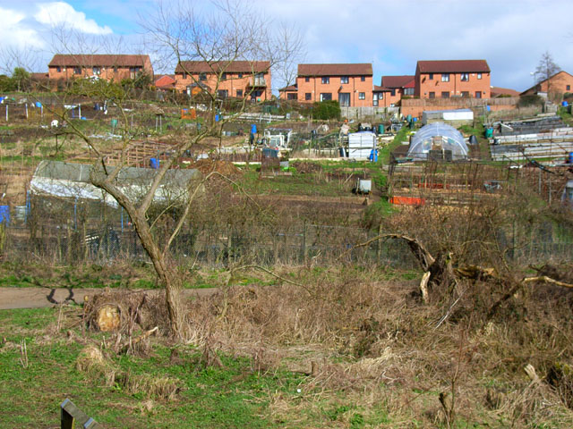 Allotments at Newton Hall