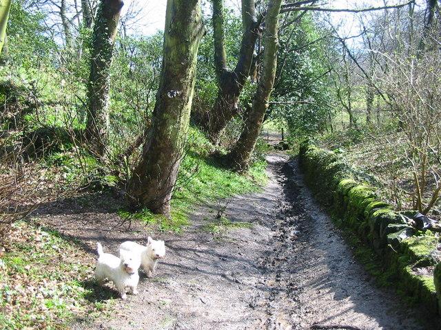 Trackway in Eatonpark Wood