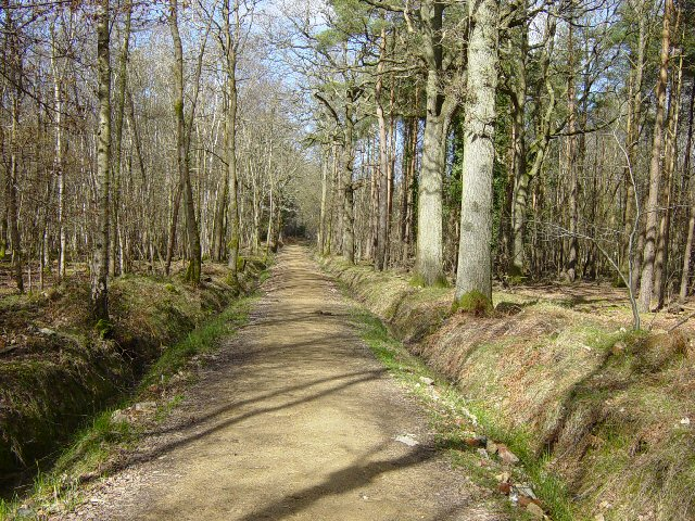 Southleigh Forest