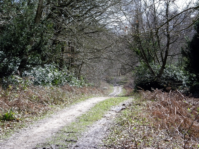 Claypit Road, Ampfield Wood