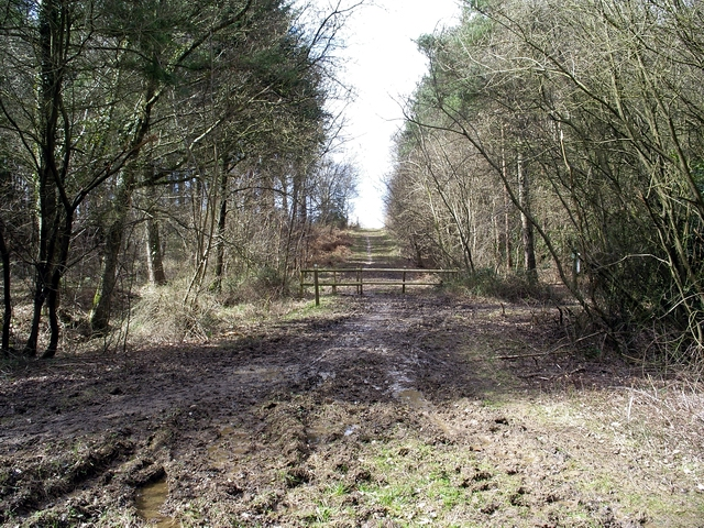 Red Gate, Ampfield Wood
