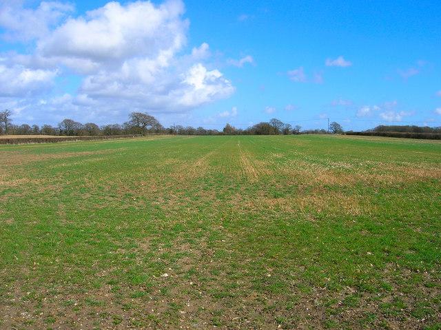 Field near Morley Farm