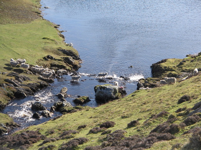 Sheep fording the Burn of Crookadale, Shetland