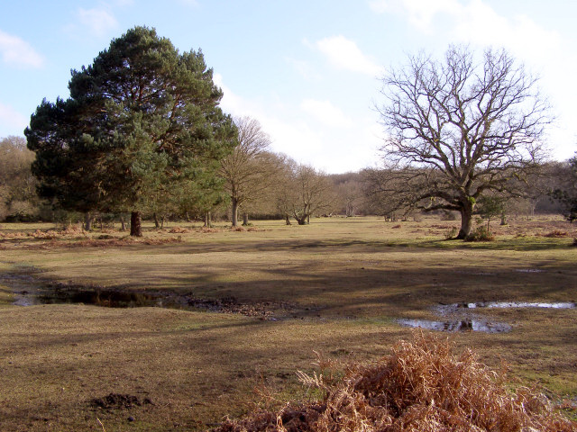 Glade north of Stubbs Wood, New Forest
