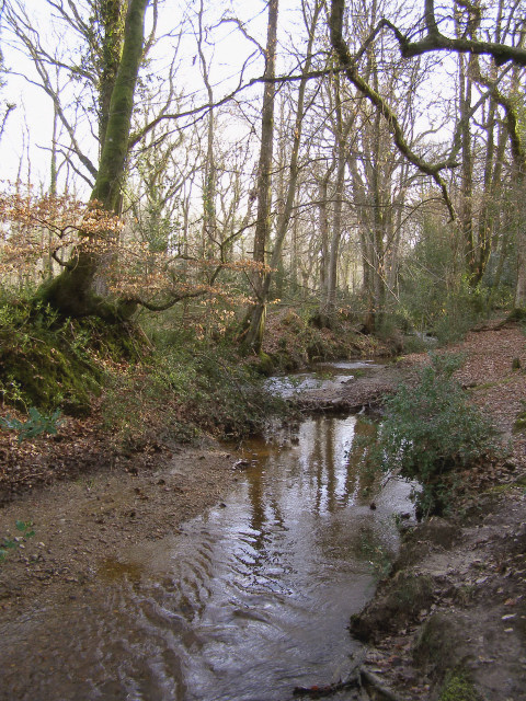 Penerley Water on the edge of Abbotstanding Wood, New Forest