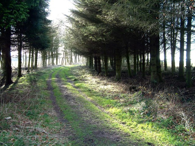 Track through Greenside woodland