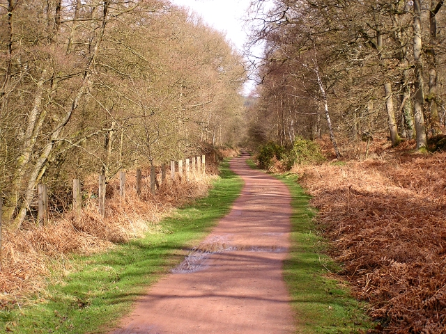 Cycle Track, Forest of Dean