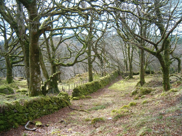 Mossy wall and woodland