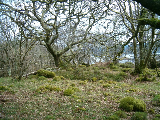 Woodland beside West Loch Tarbert