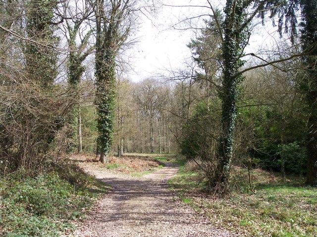 Westhide Woods