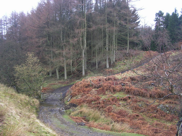 Ford : Woodclose Gill : Hope Plantation