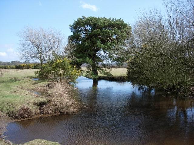 Pond on White Moor