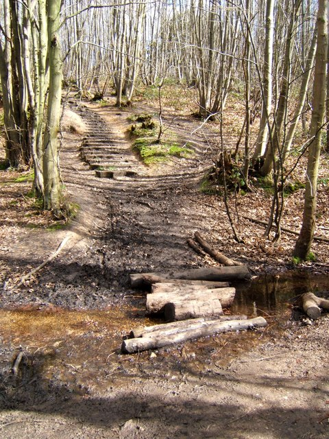 Randal Wood Path